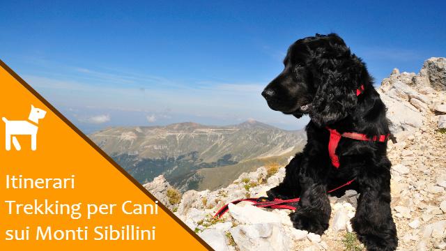 Percorsi e Itinerari per Cani sui Monti Sibillini