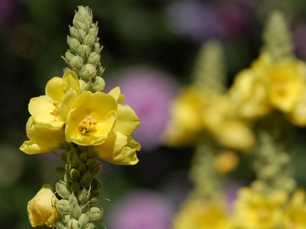 Fiori Selvatici Foto E Nomi scopri subito i fiori e le piante che crescono spontanee sui